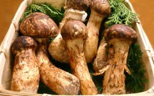 Безумный мир грибов мацутакэ - дороже золота