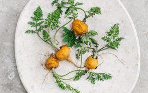 Вдохновляющие блюда с Летицией Циглютти