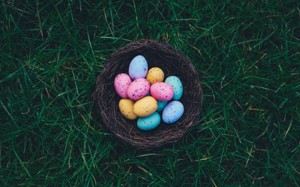 Ініціатіва в Україні, яка допомагає обрати етичні яйця