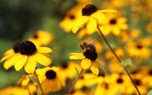 40% видів рослин у світі знаходяться під загрозою зникнення