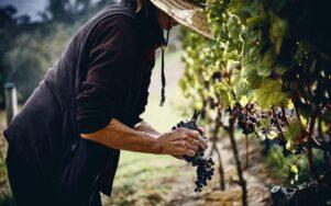 Лучшие фото 2021 года о вине и виноделии